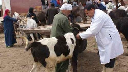الحمى القلاعية:  انتهاء عملية تلقيح القطيع الوطني من الأبقار حيت شملت 3,2  مليون رأس