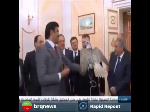 «بوتين» يهدي صقرًا لأمير قطر