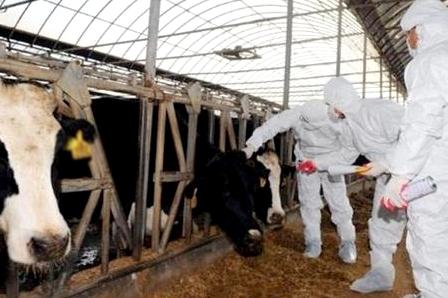 ONSSA: تعلن انتهاء الحملة الوطنية الشاملة لترقيم قطيع الأبقار
