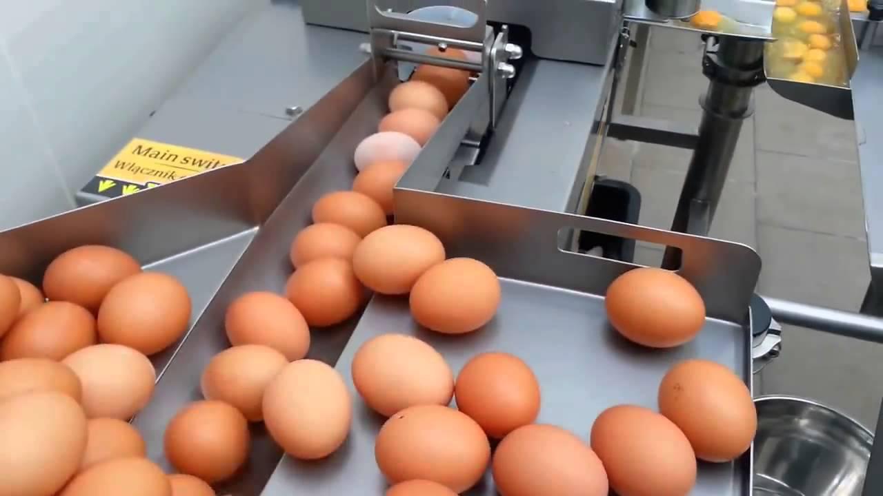 البيض اصبح بجوج دراهم… الة تكسير البيض