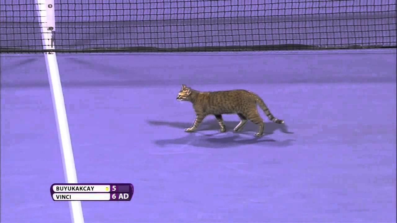قطة تساعد لاعبة في الفوز بدورة الدوحة للتنس