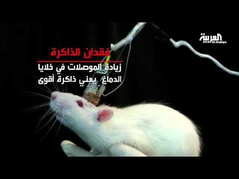 خلايا دماغية تسمى موصلات الذاكرة مسؤولة عن فقدان الذاكرة