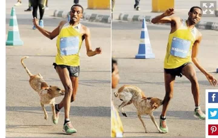 عداء كان يتدرب بإفران فعضه كلب