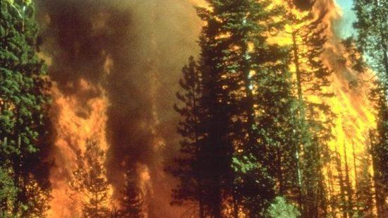 ارتفاع درجات الحرارة يتسبب في حرائق بغابات المضيق