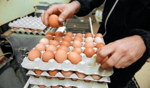 تجار سوق الجملة الوحيد للبيض بالمغرب يضربون عن بيع البيض لمستهلكين يوم غد الثلاثاء