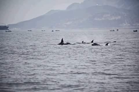 تحذير : تواجد اسماك من القرش بالقرب من شواطئ أكادير