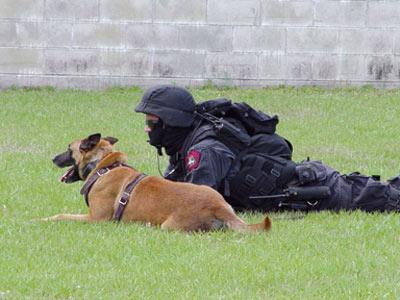 شرطة نيويورك تنشر كلابا لرصد آثار المتفجرات خلال احتفال 4 يوليو