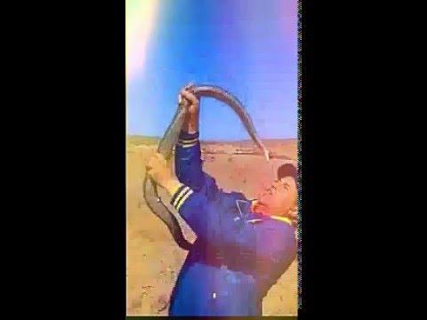 صيد الأفاعي بالصحراء المغربية