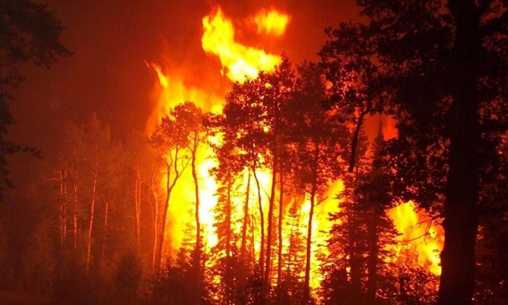 الحرائق تأتي على مئات الهكتارات من الغابة بالعرائش والناضور والحسيمة