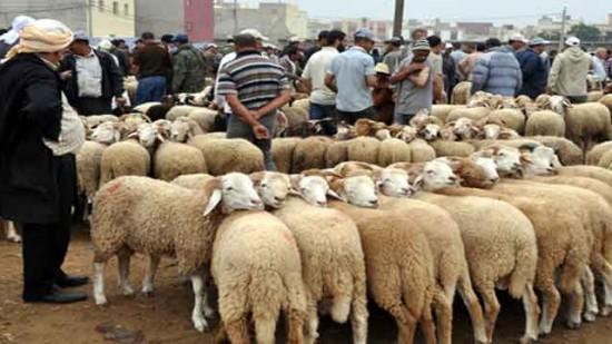 """عيد الأضحى.. العرض يناهز 7 ملايين رأس وارتفاع ثمن """"العلف"""" ينذر بالتهاب أسعار الأضاحي"""