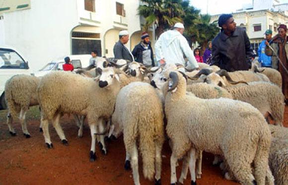 مغاربة مليلية يستعدون للاحتجاج في الشارع على حرمانهم من الأضاحي المغربية