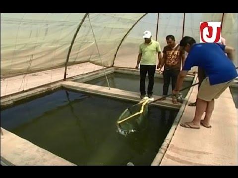 أكبر مشروع في افريقيا لتربية الأسماك بالمياه العذبة بالفقيه بن صالح