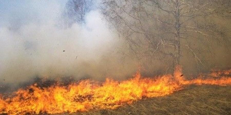 إخماد حريق غابوي تسبب في إتلاف 65 هكتارا باقليم وزان