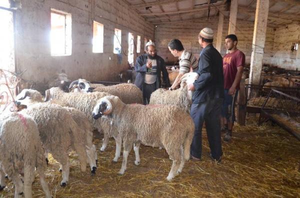 انقسام حول أسعار كبش العيد في موسم جاف