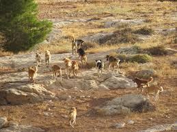زاكورة: الكلاب الضالة تغزو دواوير عديدة بجماعة تزارين