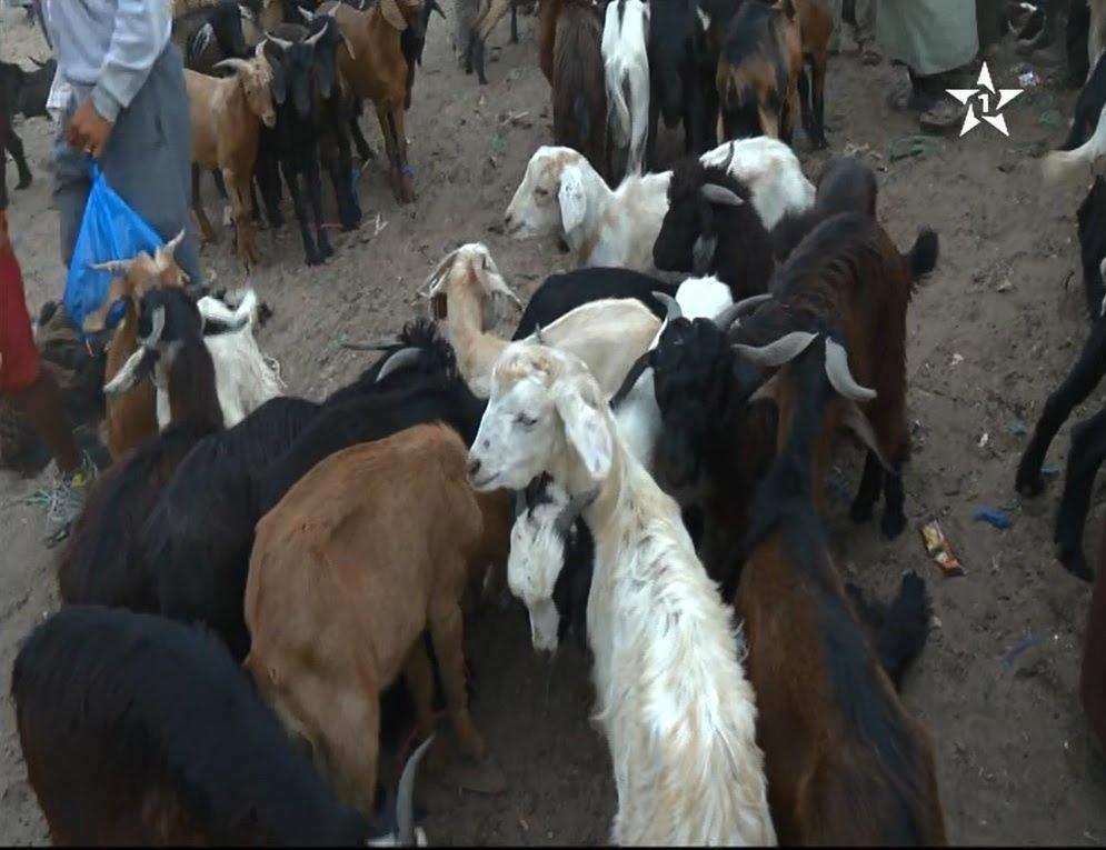 اقبال متزايد على اقتناء الماعز لأضحية العيد من سوق سبت الكردان بإقليم تارودانت