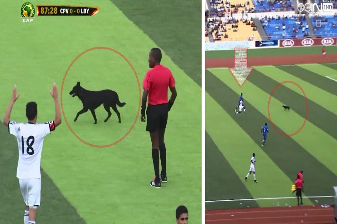 كلب أسود يدخل أرضية ملعب كاب فيردي ويحرم المنتخب الليبي من هدف