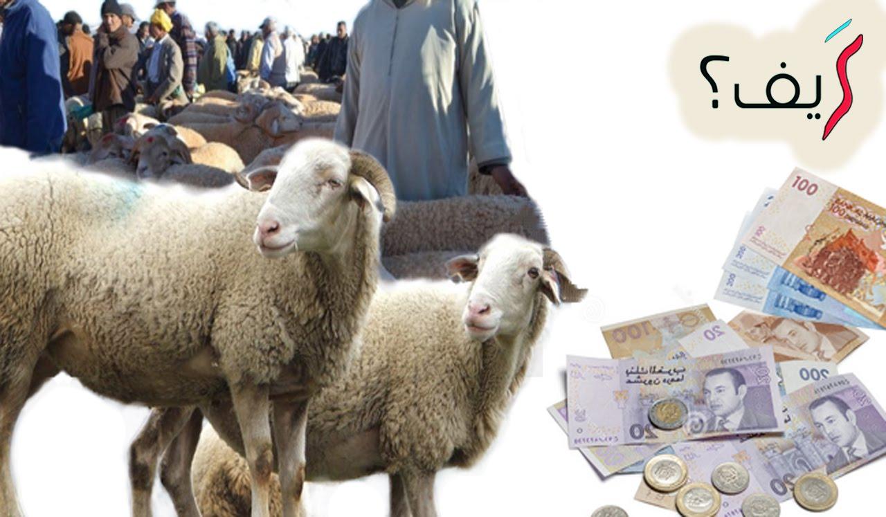 كيف تختار أضحية العيد؟ نصائح هامة قبل شراء الأضحية !!