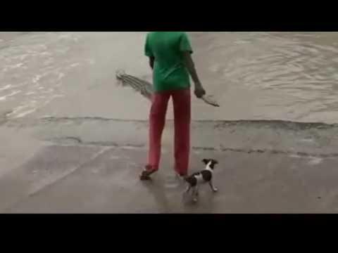 امرأة تخيف تمساح ضخم بطريقة غريبة