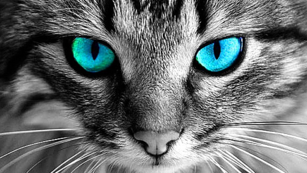 لماذا لا يجب عليكم النظر في عيني القطة..؟